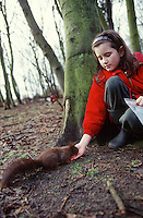 young girl in red coat feeding red squirrel in woodland