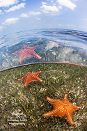 """""""Stars Above and Below"""" - Starfish Point, Grand Cayman"""