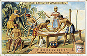 Papyrus reed (Cyperus papyrus) being used to make writing material. Stem of the reed used to make a form of paper.  Also used to produce fibre for sails, mats, cloth, etc, and roots used as fuel. Pith used as food. Artist's reconstruction. Liebig trade ca