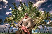 Prince Kuhio statue in Waikiki.