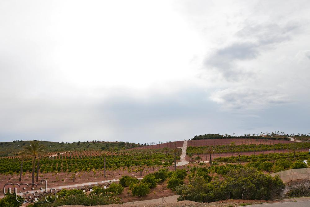 Orange Orchard, Valencia Region, Spain