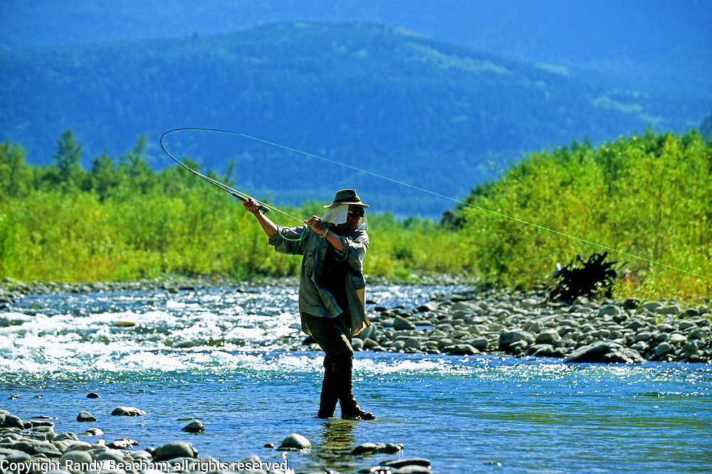 Setting the hook on a bull trout. Wigwam River, southeast British Columbia