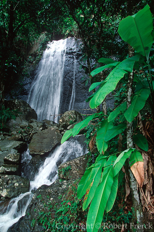 PUERTO RICO, LANDSCAPE El Yunque Rainforest/Caribbean National Forest; the only tropical rainforest in the U.S. Park System, Coca Falls