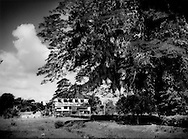 The plantation owner's house stands abandoned and derelict beneath a massive rain tree at Alliance Plantation up a side canal from the Commewijne River, Suriname.   It was from plantation such as this one, that the first African slaves escape who would form the various Maroon ethnic groups.  The Boni Maroons mounted one of the bloodiest rebellions not far from Alliance Plantation in the Commewijne River watershed.