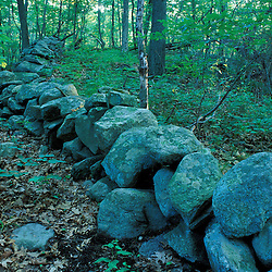 A stone wall in the forest at the Treetops Estate.  Purchased by the TPL for the Greenwich Land Trust and the State of CT in 2001.  Greenwich, CT