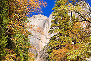 Yosemite Falls and fall color, Yosemite National Park, California