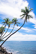 Palm trees leaning out over the ocean in Hawaii