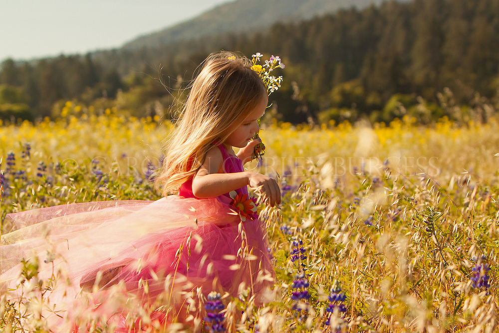 little girl running through field of wild flowers. Napa Valley, California.