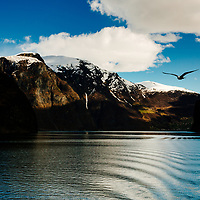 A bird flies over Nærøyfjord in Norway