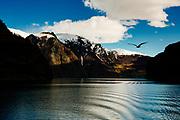 A bird flies over Nærøyfjord in Norway