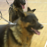 Tupelo Police K-9 officer Jax, a Belgian Malinois, and Jabbo, and K-9 officer Jabbo, a German Shepherd are help by their handlers at Tupelo Police Athletic League on Monday.