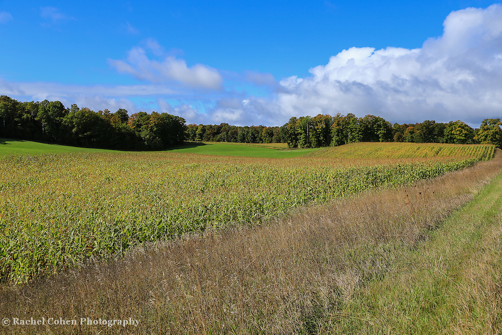 &quot;Traverse city Farmfield&quot;<br />
