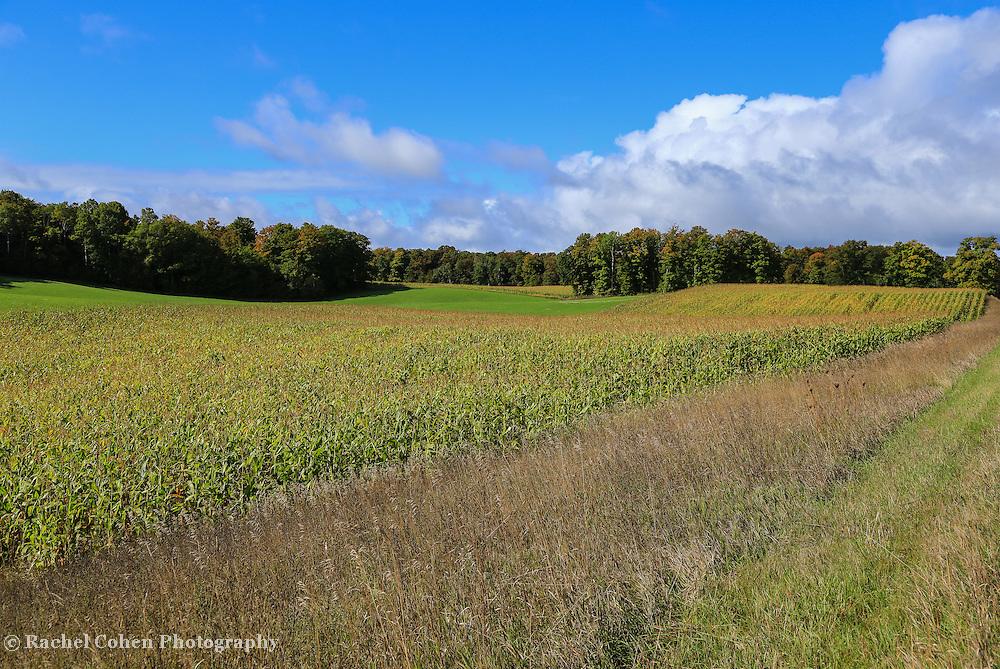 &quot;Traverse city Farmfield&quot;<br /> <br /> Beautiful corn fields and farm land outside of Traverse City Michigan!