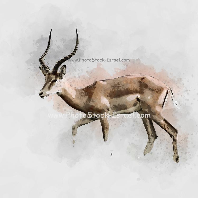 Digitally enhanced image of a side view of a male  impala (Aepyceros melampus). Photographed in Africa, Tanzania, Lake Manyara National Park,