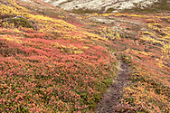 Alpine colors in Ram Valley on Chugach State Park in Southcentral Alaska. Afternoon.