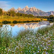 The Grand Teton Mountains reflect in Beaver Pond at Schwabacher Landing in Grand Teton National Park, Wyoming.