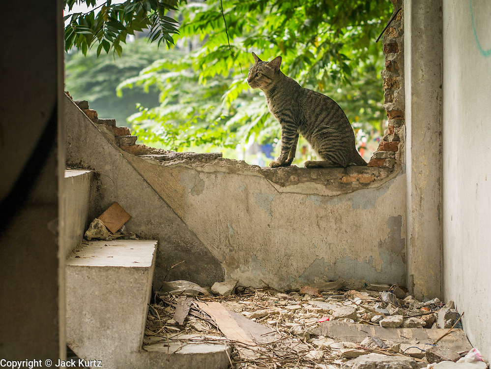 16 OCTOBER 2012 - BANGKOK, THAILAND: A cat looks up the stairs of an abandoned building on Phetchaburi Rd in central Bangkok, Thailand. The building used to be an optician's shop with residences above the ground floor shop. The global economic slowdown had little visible effect in Bangkok. Construction projects dot the city of 12 million and development continues unabated.    PHOTO BY JACK KURTZ
