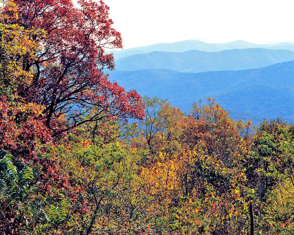 Autumn colors Skyline Drive, Shenandoah National Park, Virginia.
