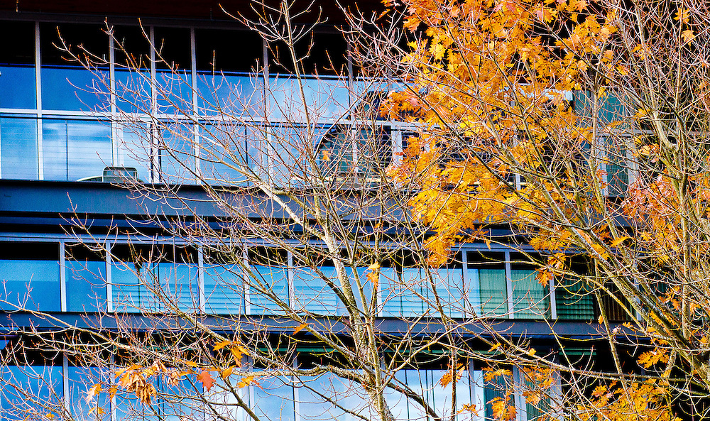 Fall Contrast in Olympia, Commercial Photography by Pettepiece Photography, Olympia, Tacoma, Seattle, Portland