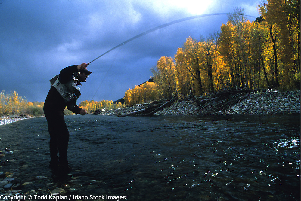 Idaho.  Sun Valley.  Man fly fishing on the Big Wood Riverin the fall.