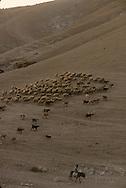 Judea desert, Bedouins camp at dawn  jericho  Israel     ///  West bank /désert de Judée campement bédouin à l'aube  jericho  Israel   ///     L931003a  /  R00061  /  P116522
