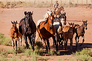 Mares with their foals