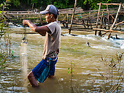 19 JUNE 2016 - DON KHONE, CHAMPASAK, LAOS: A fisherman pulls his nets out of the water at Khon Pa Soi Waterfalls, on the east side of Don Khon. It's the smaller of the two waterfalls in Don Khon. Fishermen have constructed an elaborate system of rope bridges over the falls they use to get to the fish traps they set. Fishermen in the area are contending with lower yields and smaller fish, threatening their way of life. The Mekong River is one of the most biodiverse and productive rivers on Earth. It is a global hotspot for freshwater fishes: over 1,000 species have been recorded there, second only to the Amazon. The Mekong River is also the most productive inland fishery in the world. The total harvest of fish from the Mekong is approximately 2.5 million metric tons per year. By some estimates the harvest in the Tonle Sap (in Cambodia) had doubled from 1940 to 1995, but the number of people fishing the in the lake has quadrupled, so the harvest per person is cut in half. There is evidence of over fishing in the Mekong - populations of large fish have shrunk and fishermen are bringing in smaller and smaller fish.     PHOTO BY JACK KURTZ