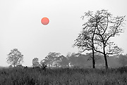 Sunset in Kaziranga NP, Assam, India.