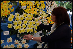 Sallyanne Foreman adjusts the new Daffodil called Georgie boy on display at the VIP preview day at the Chelsea Flower Show. London, United Kingdom. Monday, 19th May 2014. Picture by Andrew Parsons / i-Images