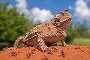 Reptiles & Amphibians 2015