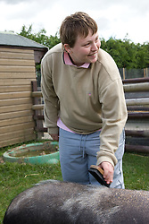 Young woman with learning disabilities on a trip to an animal centre grooming a pig,