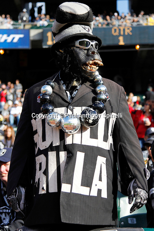 An Oakland Raiders fan in a gorilla costume looks on during the NFL preseason week 3 football game against the San Francisco 49ers on Saturday, August 28, 2010 in Oakland, California. The 49ers won the game 28-24. (©Paul Anthony Spinelli)