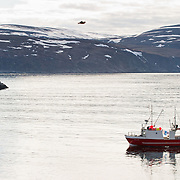 Three weeks aboard the Kong Harald. Hurtigruten, the Coastal Express. small fishing ship in the harbour of Kjollefjord, Lebesby.