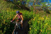 Mountain biking, Rim Creek Trail, Snowmass Village (Aspen), Colorado USA.