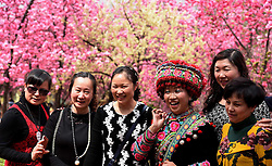 Visitors pose for photo under cherry blossom at Yuantongshan Park in Kunming, capital of southwest China's Yunnan Province, March 14, 2016. Cherry flowers there have been in full bloom recently, attracting lots of tourists for visit. EXPA Pictures © 2016, PhotoCredit: EXPA/ Photoshot/ Lin Yiguang<br /> <br /> *****ATTENTION - for AUT, SLO, CRO, SRB, BIH, MAZ, SUI only*****