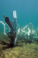 Newly placed FishHiding structures on the lake bottom.<br /> <br /> ENGBRETSON UNDERWATER PHOTO