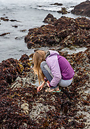 A girl coruches down for a closer look into a tidepool on the Pacific coastline of Mendocino County. Model released.