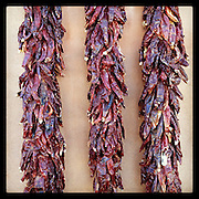 Chile pepper ristras, Old Town Albuquerque, New Mexcio.