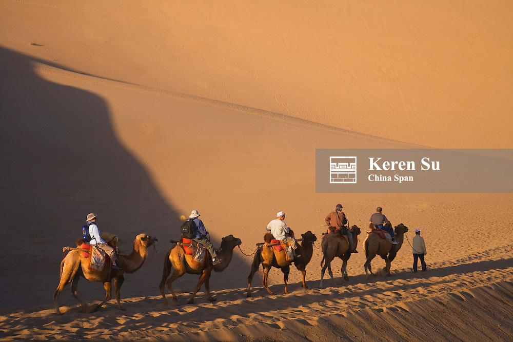 Camel caravan with sand dune, Dunhuang, Gansu Province, China