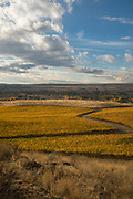 Golden vineyards, Red Mountain AVA, central, Washington