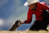 Marmot fed by a woman (model release 01/08/HTNP), Hohe Tauern National Park, Carinthia, Austria