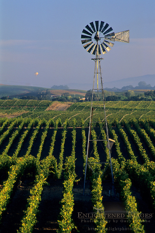 Morning light and windmill over vineyards in the Carneros Region, Napa Valley, Napa County, California