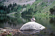 seated man on rock fly fishing