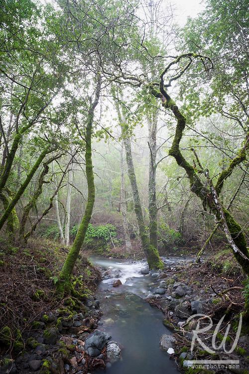 Cascade Creek Converges With San Anselmo Creek / Cascade Canyon Open Space Preserve, Fairfax, California