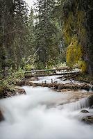 Louise Creek., Alberta, Canada, Isobel Springett