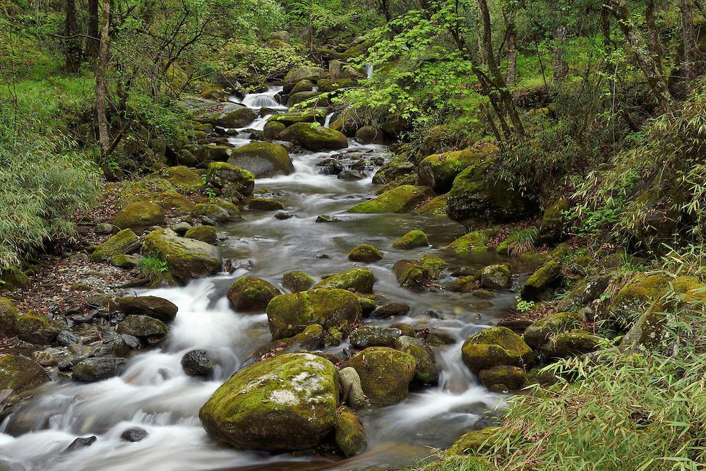 Small waterfalls, Tangjiahe National Nature Reserve, NNR, Qingchuan County, Sichuan province, China
