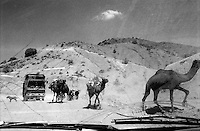 Traveling from Kabul to Khost on a 'Corolla', a taxi shared with 4 other passengers - plus the driver. Camels enrich the beauty of the stony road.
