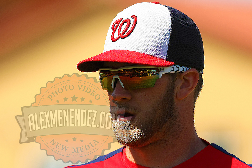 Washington Nationals left-fielder Bryce Harper is seen during a MLB spring training exhibition baseball game against the Houston Astros at the Osceola County Stadium on Thursday March 7, 2013 in Kissimmee, Florida. (AP Photo/Alex Menendez)