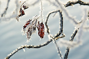 Short depth of field<br />