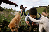 Doris Peranchiguay harvests potatoes with her mom and her son.  Most families in the Island of Teuquelin plant potatoes for their own consumption, only a few sell it outside the island. <br /> <br /> Boats only come to Teuquelin, an islet off the Chiloe island, once a week or when there is an emergency.  The only people who live in Teuquelin are of the Peranchiguay family, who arrived about 200 years ago. Nowadays, there are only elderly people, women, and four kids. The youth left, and only eight families survive off the land, the sea, and luga, an algae that is harvested and sold to make shampoo and daipers.